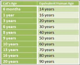cats years to human years blogg d 253 ral 230 knisins 20 jan 250 ar 2014 common health
