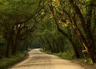 Old Country Dirt Road