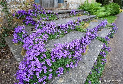 purple flower steps stanton gloucestershire 1 from