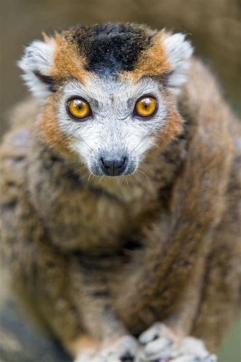 Pin on Lemur Walk
