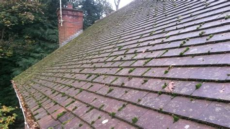 tile roof cost roof moss how to it and prevent it s regrowth