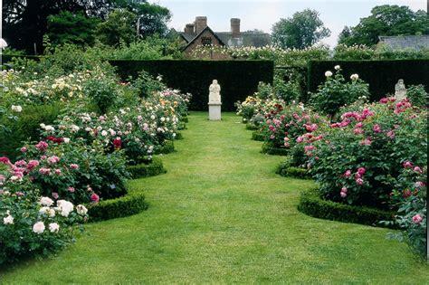 david garden roses david austin rose gardens