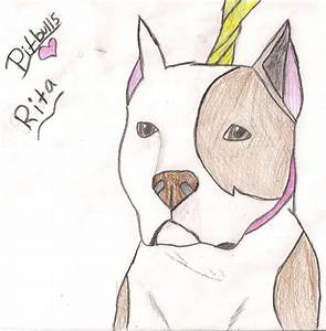 Drawn pit bull face - Pencil and in color drawn pit bull face