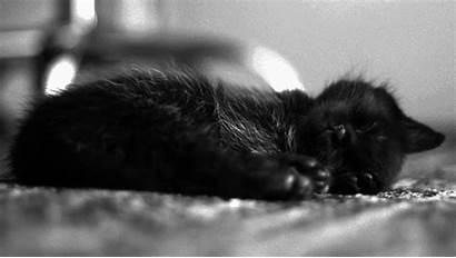 Kittens Cat Sleeping Sleep Gifs Kitten Grunge