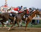 Image result for Affermed race horse