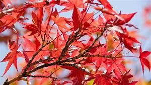 Immergrüne Sträucher Und Bäume : b ume und str ucher richtig pflanzen und pflegen themen ~ Michelbontemps.com Haus und Dekorationen