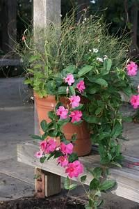 Pot Pour Balcon : fleurs en pots pour balcon et terrasse par my little jardin homify ~ Teatrodelosmanantiales.com Idées de Décoration