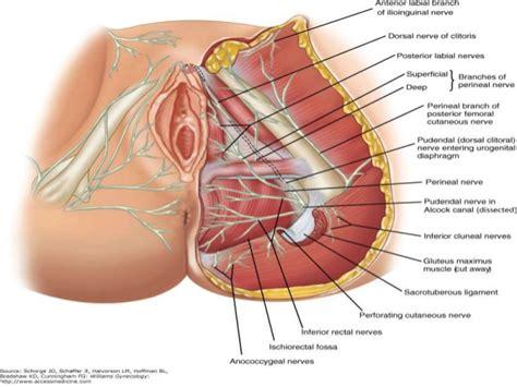 pelvic floor pt pinterest pelvic floor medical and