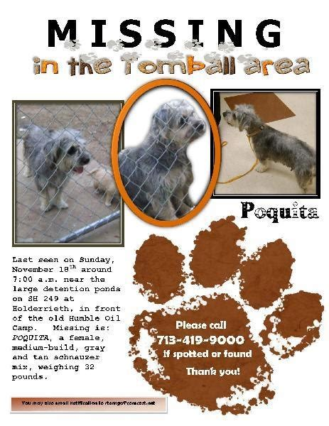 missing in tombill area lost and found pets
