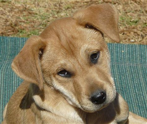 adoptable mixed breed puppies puppies daily puppy