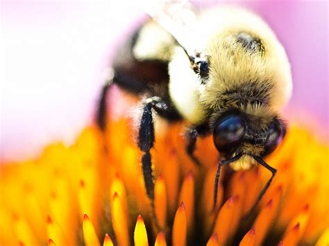 Prevention, Control & Facts About Bees