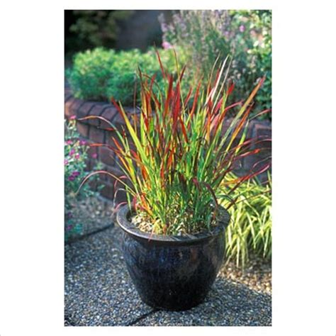 incorporating ornamental grasses   landscape zen