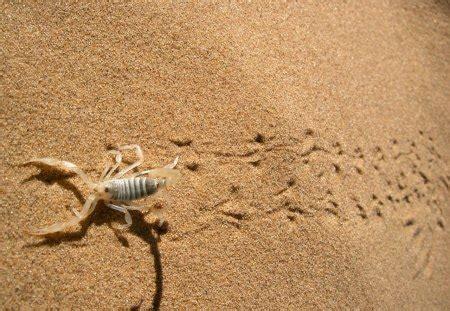 Scorpion Animal Wallpaper - scorpion animal wallpaper