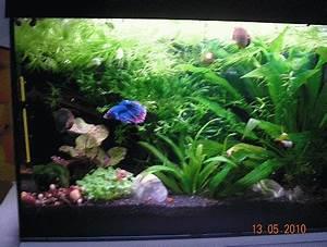 Pflanzen Für Aquarium : pflanzen f r kampffische ~ Buech-reservation.com Haus und Dekorationen