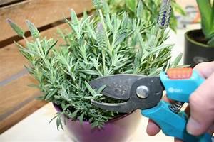 Lavendel Im Topf überwintern : pflege von lavendel im topf von a z schneiden umtopfen co ~ Frokenaadalensverden.com Haus und Dekorationen