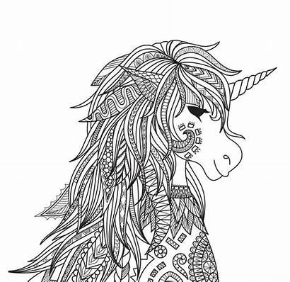 Unicorn Coloring Head Adult Illustration Vector Zendoodle