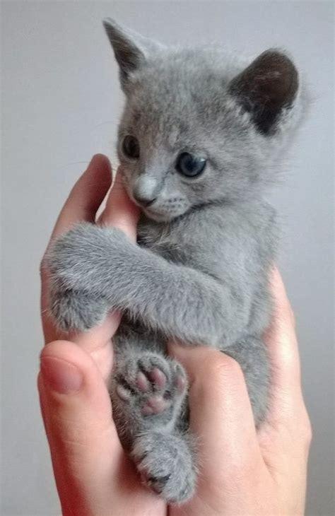 cute grey kitten holding  humans hand luvbat