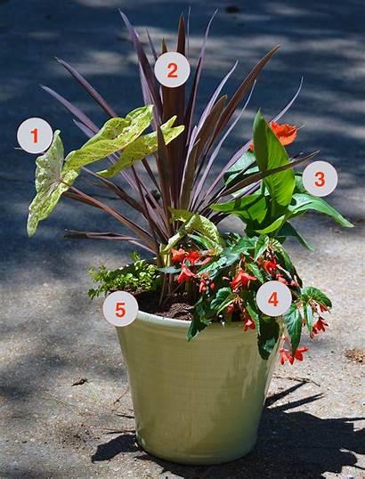 Tropical Container Garden Plants Planting Planter