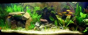 Aquarium Einrichten Beispiele : 240 l gesellschaftsbecken ~ Frokenaadalensverden.com Haus und Dekorationen