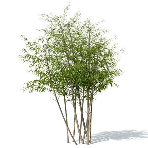 golden bamboo plant 3d max tree arboles