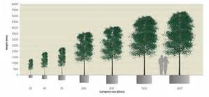 plant sizes pictures to pin on pinsdaddy