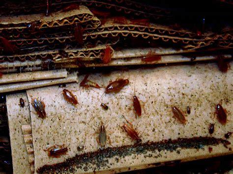 cockroach extermination control dallas fort worth texas