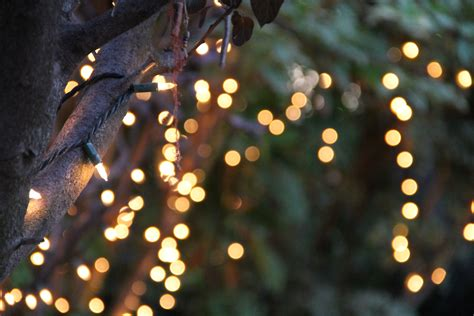 free stock photo of bokeh of string lights on tree