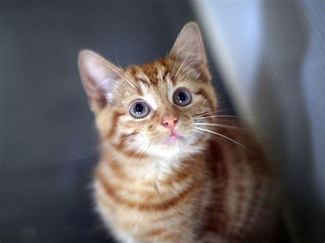 Кошки и Формула - 1.flv - YouTube