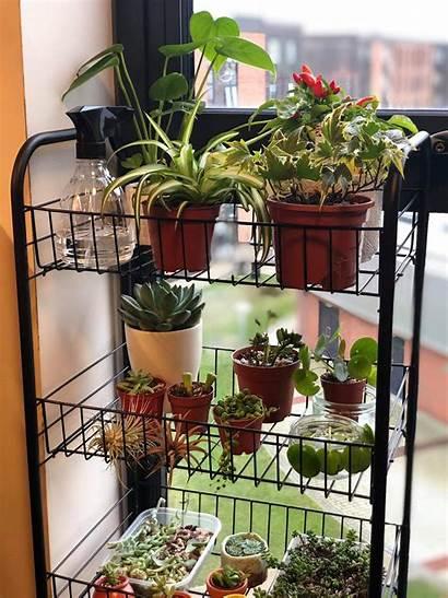 Indoor Garden Starting Vrinda Bajaj Taken East