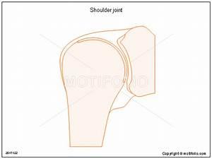 Shoulder Joint Illustrations