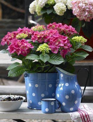 quand et o 249 planter ses hortensias l hortensia a t il encore des secrets pour vous