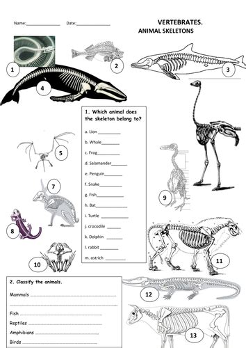 animals skeletons by maytechuna teaching resources