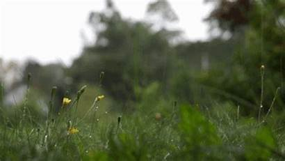 Rain Gifs Rainy Animated Nature Spring Quiet
