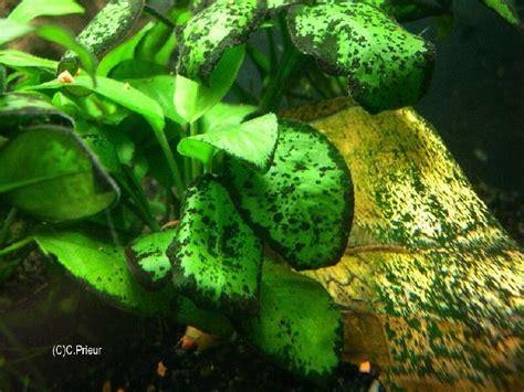 petits points algues vertes g 233 n 233 ral forum aquariophilie aquarium aquaryus