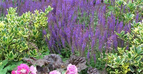 Rosenbeet Anlegen Beispiele by Immerbl 252 Hendes Beet Gestaltungstipps Mein Sch 246 Ner Garten