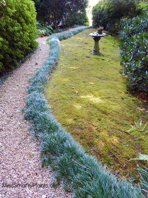 gravel garden path the perfect garden path miss smarty plants