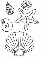 Starfish Seashell Coloring Pages Drawings Drawing Simple Beach sketch template