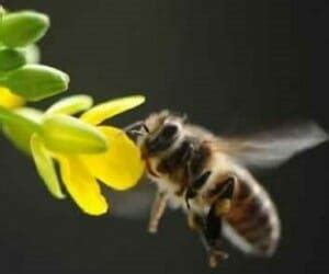 allontanare mosche da casa  modo naturale