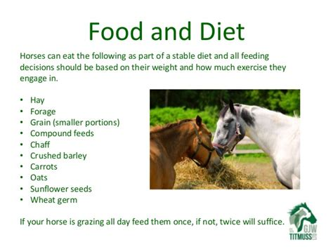 horse healthy after horses eat looking pet help diet keep loving key humans they animals