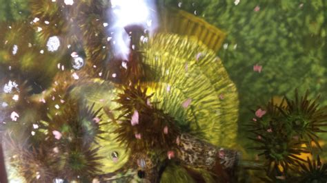 algue dans l aquarium probl 232 me d algues marrons dans l aquarium