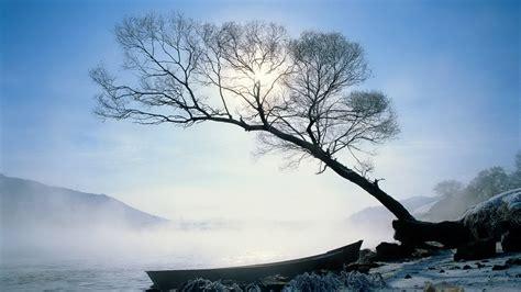 winter trees winter wallpaper 22173886 fanpop