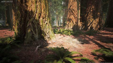 willi hammes ue redwood forest