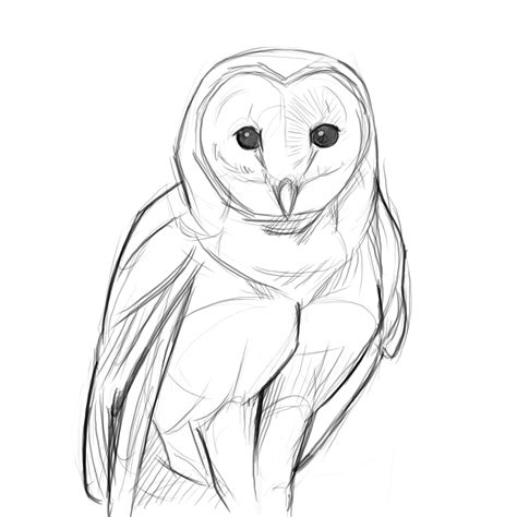 owl drawing  drawing