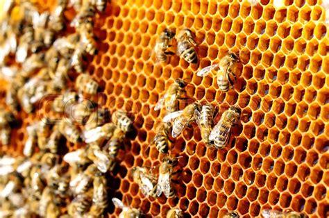 bees work  honeycomb honey cells stock photo