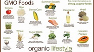 Top 20 genetically modified foods, products   The Guardian ...