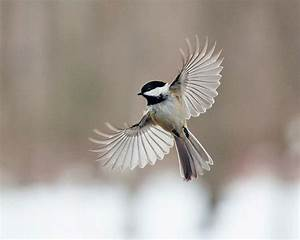 The Art of Staying Aloft – Pictures of Flying Birds by ...