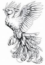 Phoenix Bird Tattoo Flash Drawings Drawing Freetattoodesigns sketch template