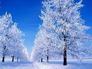 winter scenes   1600x1200 Great Winter Snowy Scene desktop ...