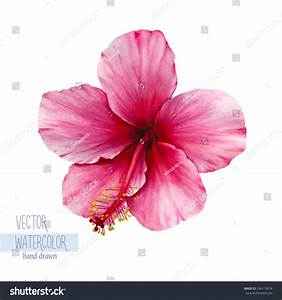 Watercolor Single Flower | www.pixshark.com - Images ...