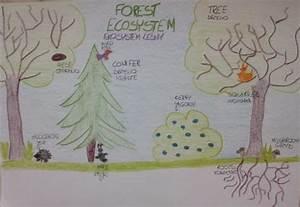ecosystemsaroundus - Paintings and drawings